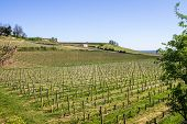 image of bordeaux  - growth of a vineyard in the countryside of Saint Emilion Bordeaux France - JPG