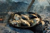 foto of freshwater fish  - Pan Fried freshwater fish cooked over a campfire in a campaign - JPG