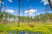stock photo of wetland  - Beautiful landscape with wetlands at springtime - JPG