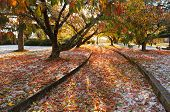image of hail  - The autumn scene at Memory Park after a heavy hail storm covered the ground in a thick covering of ice and amidst a warm palette of colourful autumn leaves - JPG