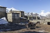 foto of mustang  - Local houses at Muktinath village in lower Mustang district Nepal. This photo was shot in early morning. Area was cover by snow. - JPG