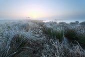stock photo of swamps  - cold misty sunrise on swamp Drenthe Netherlands - JPG