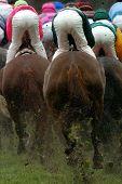 Horseracing Rear