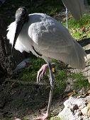 Crane On One Leg