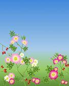 Rosas selvagens