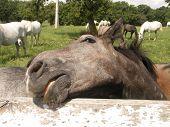 Horse Head #1