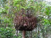 Epiphyte On A Tree In The Rainforest