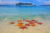 A cruiseship and a starfish