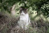 Portrait Of A Tabby Gray Stray Cat With Green Eye Sitting And Looking In The Grass, Animal Natural B poster
