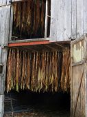 stock photo of tobacco barn  - Tobacco hanging to dry in old barn near Castelnau France - JPG