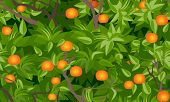 stock photo of tangerine-tree  - tangerine tree foliage seamless background vector drawing - JPG