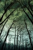Twilight in the forest, mystic nightscape