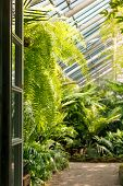 View To The Open Door And Greenhouse With Various Ferns, Palms And Other Tropical Plants In Sunny Da poster