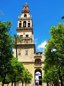 Cordoba Mosque and orange bell tower view