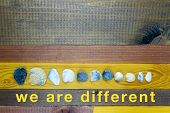 Seashells Of Various Sizes And Shapes Below Positioned - Concept Of The Union Of Differences - On Th poster