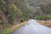 Fallen Rock On The Road. Traffic Hazard, Rock Fall From Hills. Driving In The Park poster