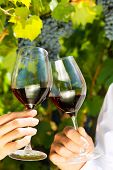 Woman and man in vineyard drinking red wine in the sunshine clinking the glasses