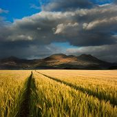 Beautiful Landscape Of Corn Field Leading To Mountain Range With Dramatic Sky