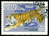 Vintage  Postage Stamp. Ussurian Tiger.