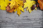 Autumn Background With Maple And Oak Leaves And Acorns