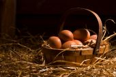 image of early morning  - Collecting eggs from the hen house early morning lighting
