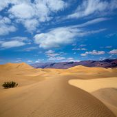 image of mesquite  - Mesquite Dunes desert in Death Valley National Park California - JPG