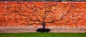 Flat tree on a red brickstone wall