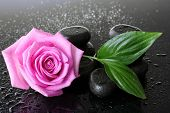 Spa stones with drops, pink rose and green leaves on grey background