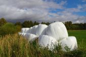 stock photo of dinosaur-eggs  - Silage bales in the field - JPG