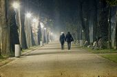 The avenue of city park, at night in fog - old styled photo