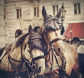 stock photo of hackney  - Two horses in traditional Vienna carriage harness - JPG