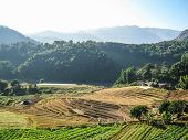Agriculture In Doi Inthanon National Park