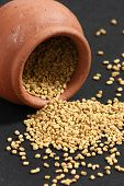 stock photo of fenugreek  - Fenugreek seeds or Fenugreek is Kasuri Methiis frequently used in the preparation of pickles curry powders and pastes and is often encountered in the cuisine of the Indian subcontinent - JPG