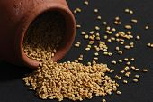 pic of fenugreek  - Fenugreek seeds or Fenugreek is Kasuri Methiis frequently used in the preparation of pickles curry powders and pastes and is often encountered in the cuisine of the Indian subcontinent - JPG