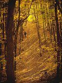 Man Walking  In Forest In Autumn