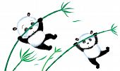 stock photo of wind blown  - Two panda jumping on bamboo blown away by the wind - JPG