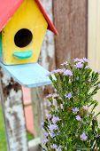 Flower With Birdcage