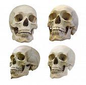 set of human skull isolated on white background