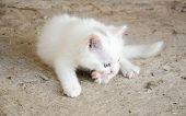 Beautiful white cat sitting