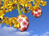 Easter Eggs, Hanging On Forsythia Branch