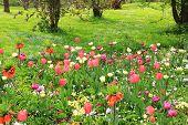 Multicolored Springlike Flowerbed In The Park