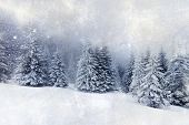 Christmas background with snowy fir trees - vintage photo