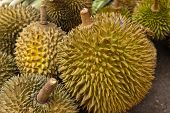 stock photo of smelly  - Big and smelly durian fruit at market - JPG