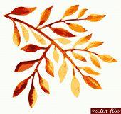 Watercolor autumn twig design element. Vector illustration