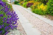 pic of sundial  - a gravel pathway between formal beds of lavender leading to an old sundial and trimmed hedges beyond - JPG