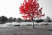 pic of bench  - Empty park bench under red tree in black and white - JPG