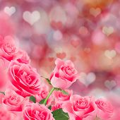 Pink roses, Valentine's day background