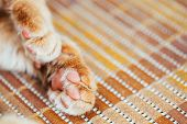 Close Up Paw Pads Peaceful Red Cat