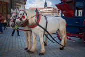 image of carriage horse  - Horse carriages in Dresden - JPG