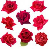 Collage Of Eight Red Roses